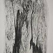 Image Of Face In Wood Bark Art Print by Glenn Calloway