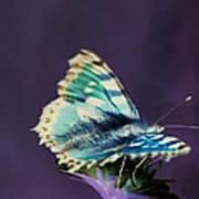 Imaginary Butterfly Art Print