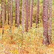 Imaginary Forest Art Print