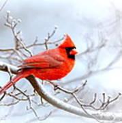 Img 2259-22 - Northern Cardinal Art Print