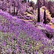Img 4892_ Purple Lupine_ Yosemite National Park  Art Print