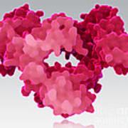 Immunoglobulin E, Antibody Art Print