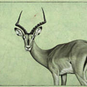 Impala Print by James W Johnson
