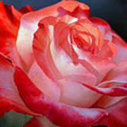 Imperfect Rose Art Print