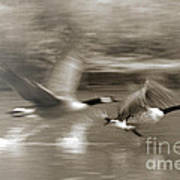 In A Blur Of Feathers Art Print