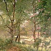 In A Fairy Woodland Art Print