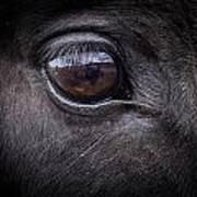 In A Horse's Eye Art Print