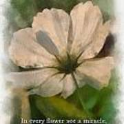 In Every Flower See A Miracle 01 Art Print