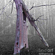 In Memory Of A Tree Art Print