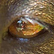 In My Dog's Eyes I'm Everything Art Print