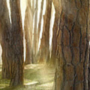 In Pine Forest Art Print