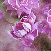In Pink Art Print