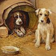 In The Dog House Art Print
