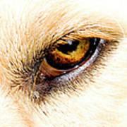 In The Eyes.... Art Print