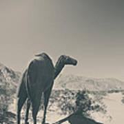 In The Hot Desert Sun Art Print