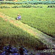 In The Rice Fields Art Print