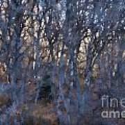In The Woods V2 Art Print