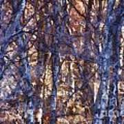 In The Woods V5 Art Print