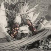 Indian Corn In Basket Partial Color Art Print