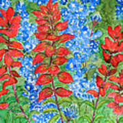 Indian Paintbrush And Bluebonnets Art Print