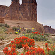 Indian Paintbrush And The Three Gossips Art Print