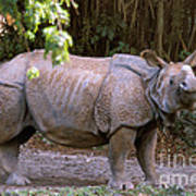 Indian Rhinoceros Art Print