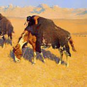 Indians Simulating Buffalo Art Print