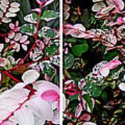 Indigo Plant In Stereo Art Print