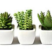 Indoor Plants Print by Boon Mee