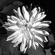 Infrared - Flower 03 Art Print
