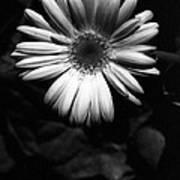 Infrared - Flower 05 Art Print