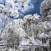 Infrared Pond And Reflections 2 Art Print