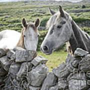 Inishmore Horses Art Print