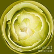 Inner Cabbage Orb Art Print