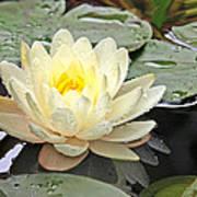 Inner Glow - White Water Lily Art Print
