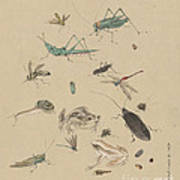 Insects C1825 Art Print
