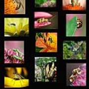 Insects Collage Art Print