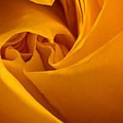 Inside A Yellow Rose Art Print