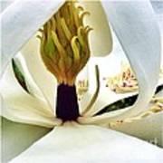 Inside Magnolia Art Print