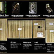 Instructions Cedar Nest Box For Kestrel And Owl Art Print
