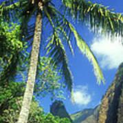 Io Valley Palm And Needle Maui Hawaii Art Print