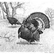 Iowa Gobbler Art Print