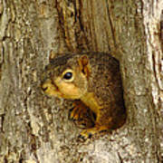 iPhone Squirrel In A Hole Art Print