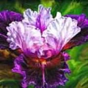 Iridescent Iris Art Print