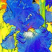 Iris 10 Art Print