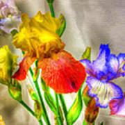Iris #18 Art Print