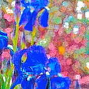 Iris 22 Art Print