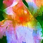 Iris 53 Art Print by Pamela Cooper