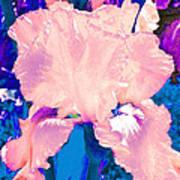 Iris  9 Art Print