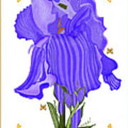 Iris And Old Lace Art Print